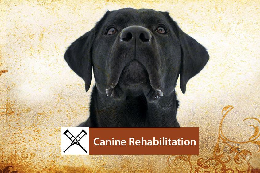 Canine-Rehab-Banner