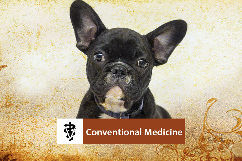 Conventional-Medicine-Banner