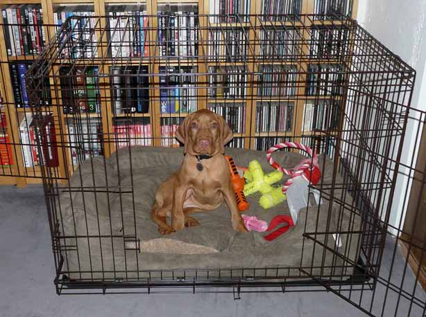 Trying Out the New Crate.