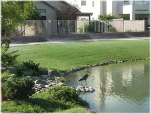 The Oasis at Anozira lake community in Tempe