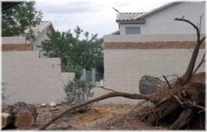 Tree fell on wall