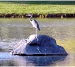 May's Pond Wildlife