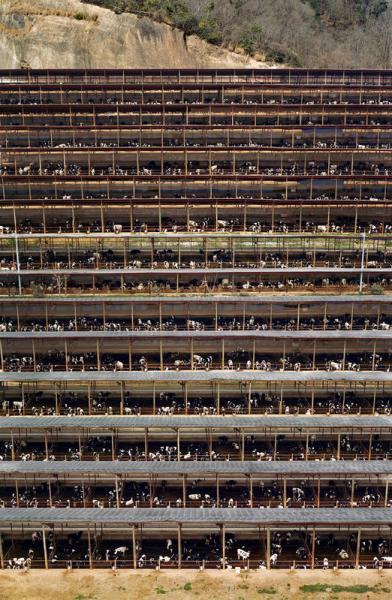 Gursky Fukuyama, 2004 Food Photography for Sustainability