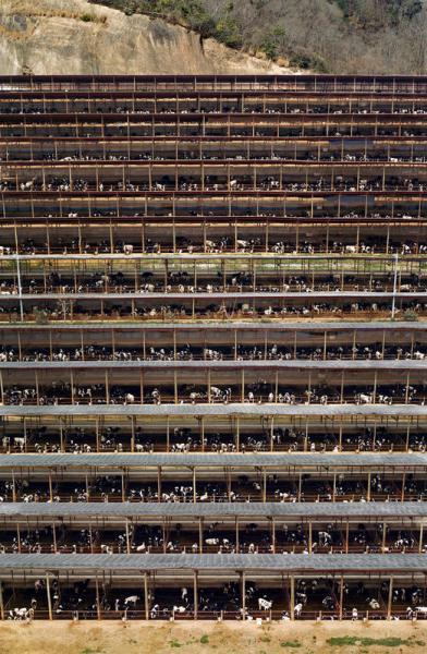 Gursky Fukuyama, 2004 Food Photography for Sustainability