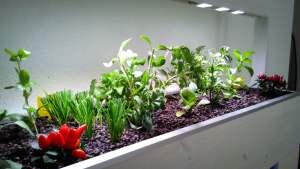 Pflanzen indoor Aquaponik