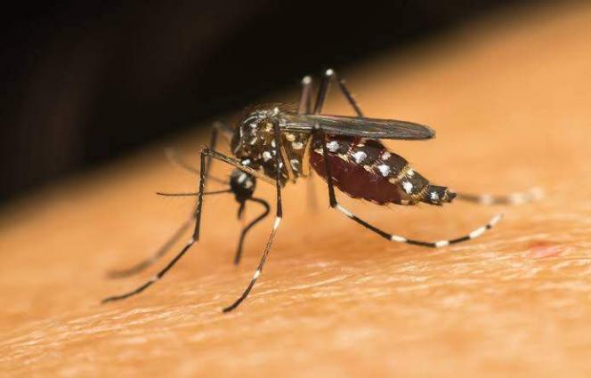 Tally Of Dengue Cases Rising Alarmingly - UrduPoint