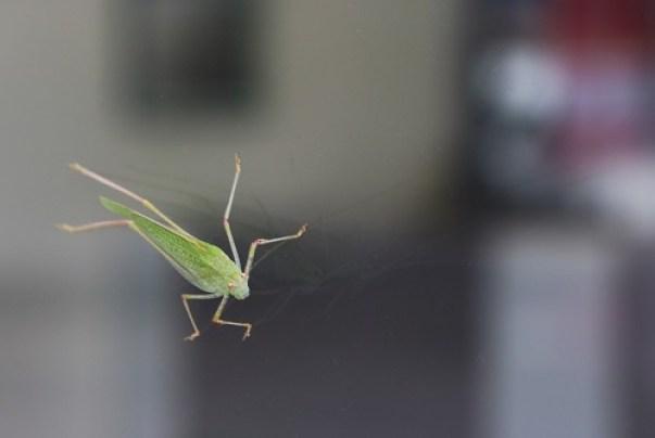 challenge photo insecte vert et reflet
