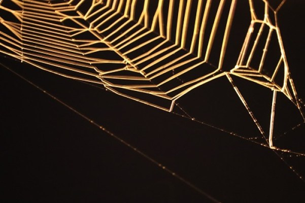 challenge photo toile d'araignée éclairée