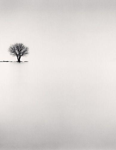 arbre de Michael Kenna