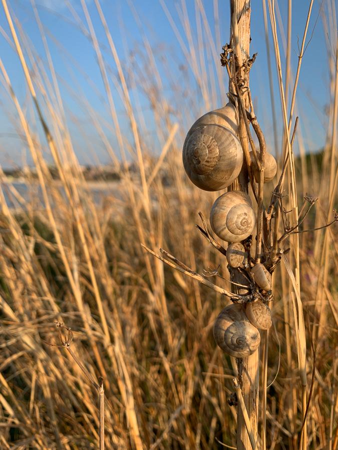 Snails, Znjan Beach, Split, Croatia ©2020, Cyndie Burkhardt.