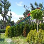 Велике квіткове панно до EURO-2012 в центрі Львова