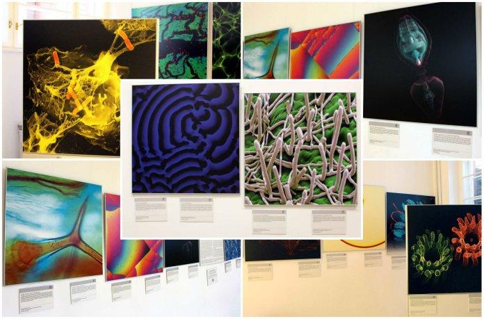 Наука як мистецтво, або «Картини зі світу науки»
