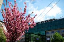 Шматочок Японії у Львові