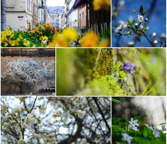 Топ-7 квітучих місць у Львові