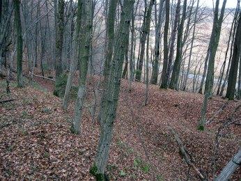 Оборонний вал городища Деревач . На задньому плані долина річка Зубра.