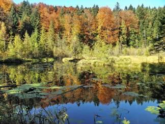 Журавлине озеро на Львівщині