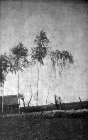 Антоніна Кулик. З зеленої Буковини, 1930-ті рр. (Світло й Тінь. – 1936. – Ч. 4)