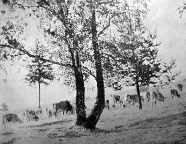 Анна Ортинська. Білий ранок, 1930-ті рр. (Світло й Тінь. – 1938. – Ч. 6)