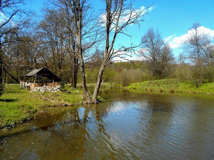 Ставок на річці Колодниця (урочище Каніча гора). Фото Андрія Книша