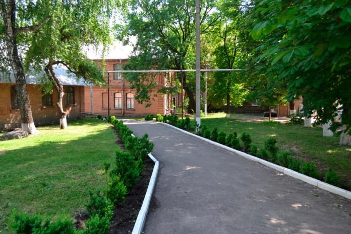 Територія Павлиської школи. Самшитова алея