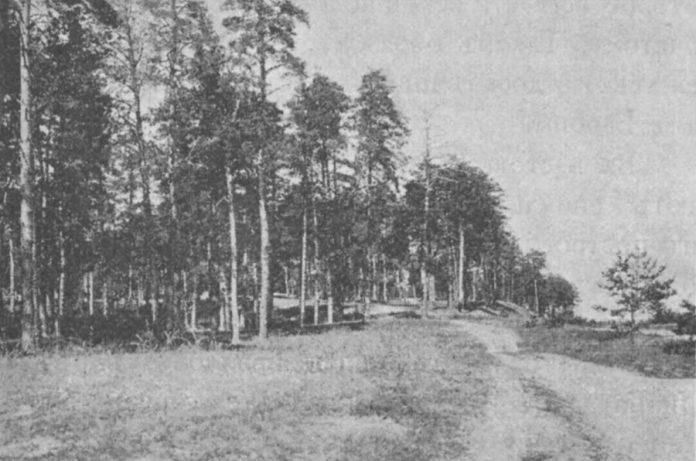 Місцевість біля станції Олика