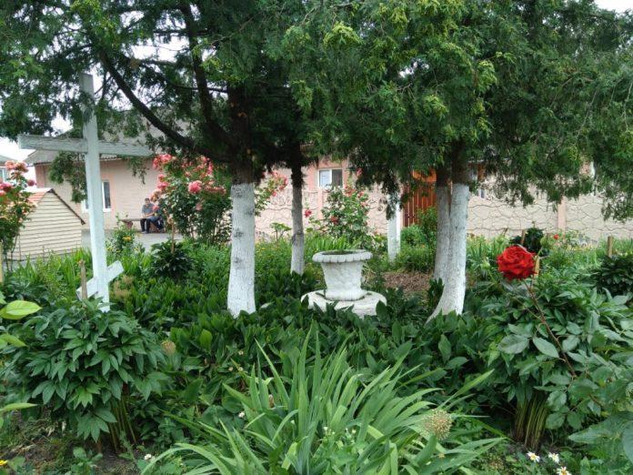 З колишнього розкішного саду збереглася ваза, яку інтернатівці обсадили квітами і дбайливо доглядають