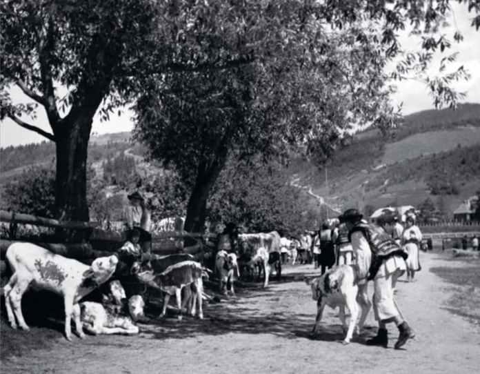Гуцули у Жаб'єму (тепер Верховина) виводять худобу на тваринний ринок. Більшість покупців на ньому - єврейські торгівці. До Другої світової війни США активно закуповували м'ясо в Польщі