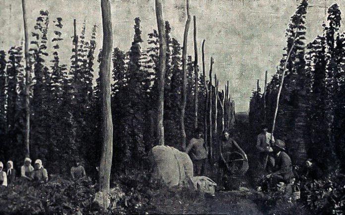 Збір хмелю на Дубенщині, 1930-ті роки