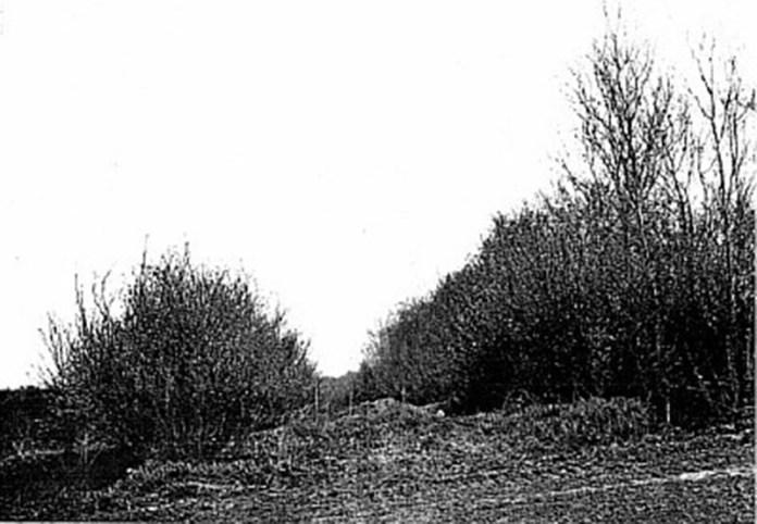 Так виглядало місце розстрілу в Сосонках у 1976 році