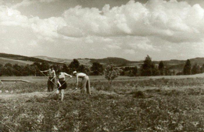 В полі, фото Карла Звіринського
