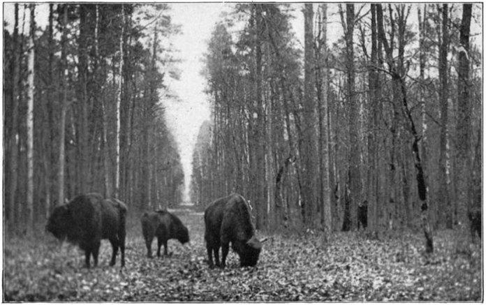 Дикі тварини в парку в Пилявині, поч. ХХ ст.
