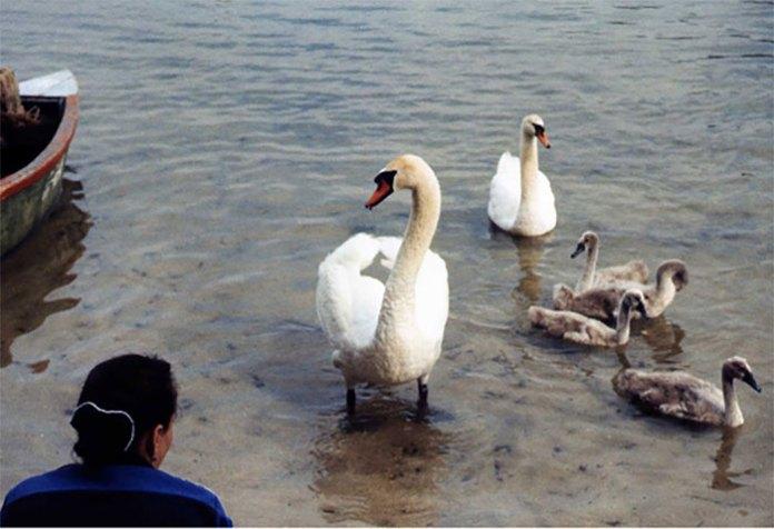 Біле озеро. Дружня сім'я. Світлив Олександр Кіцера