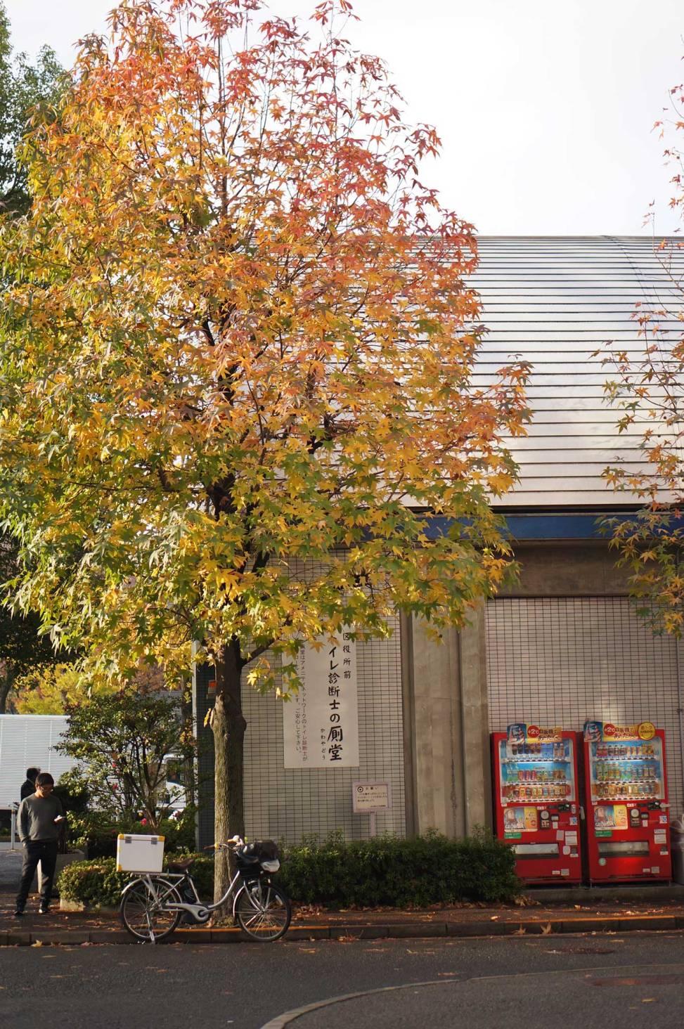 acer tree, Koen-dory, Shibuya