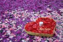 pool-of-roses