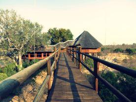 Ulusaba-Game-Reserve (8)