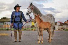 Glodien-Japhtas-Horses