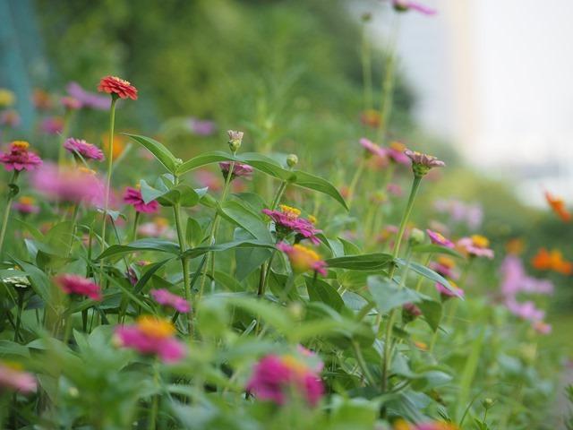 自由に咲く花