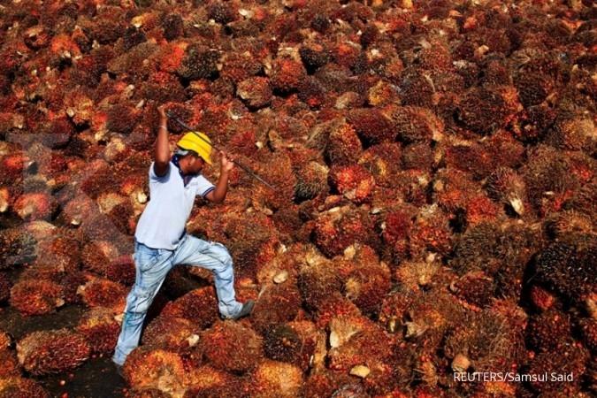 Bea ekspor Malaysia ditangguhkan, harga CPO mekar