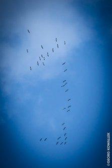 Formationsflug 2