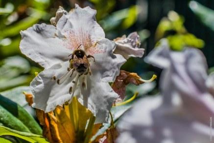 Bienchen und die Blümchen