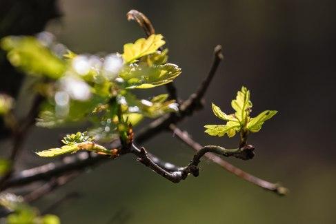 Nochmal Blätter