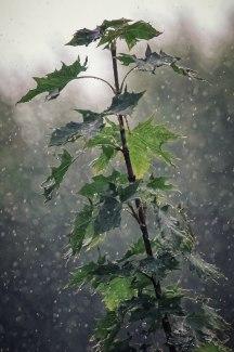 Regenfreitag 3