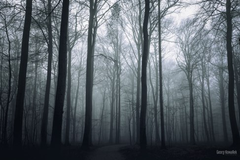 Ostsee im Nebel 23