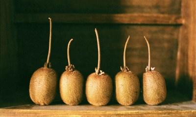 Still Life: Kiwi Fruit
