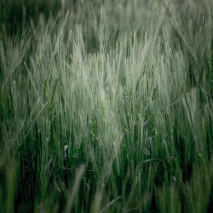 Fields of Green Ⅶ