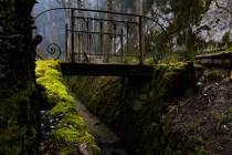 Wald 02