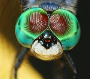 Cirone Dragonfly - Avian and Macro Photography