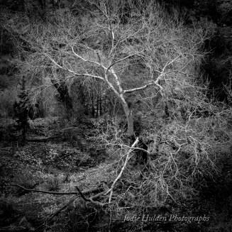 Circle of Light by Jodie Hulden