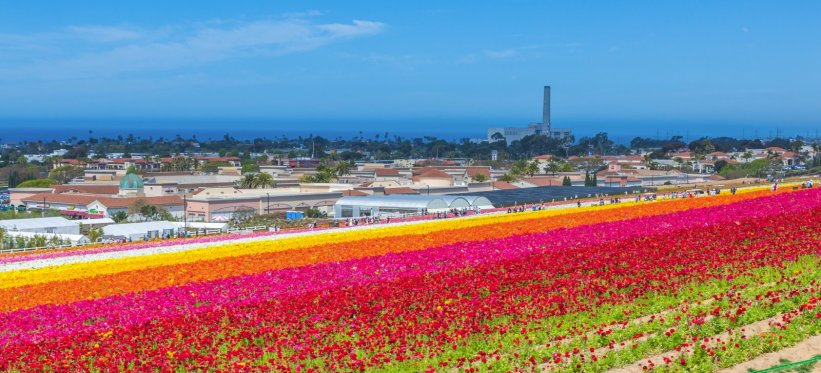 Trenton Badillo - Carlsbad Flower Fields