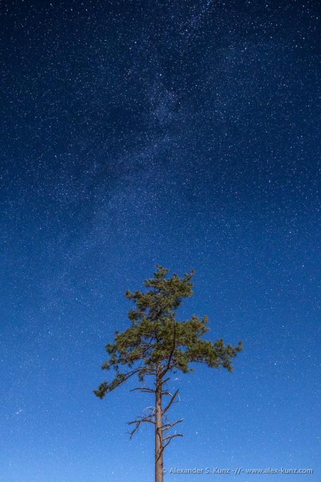 Alexander S. Kunz - Moonlit Pine under Stars
